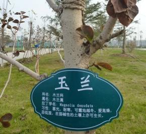 玉兰树标牌
